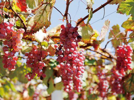 勝沼ワイナリーおすすめ6選!優雅な自然とお好みのワインで休日を満喫しよう