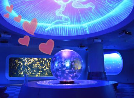 クリスマスは江の島デート♡定番の水族館からイルミネーションなど定番&人気スポット3選