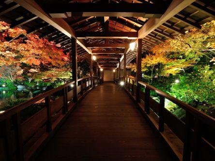 秋のデートにも。関西の紅葉ライトアップがおすすめの名所2020