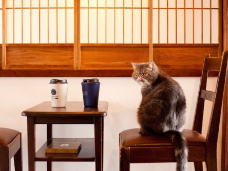 アイドル猫ちゃんたちに会いに行く!築100年の京町家猫カフェ
