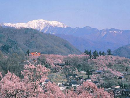 長野県のお花見・桜の名所(2021)夜桜・ライトアップや桜祭りも