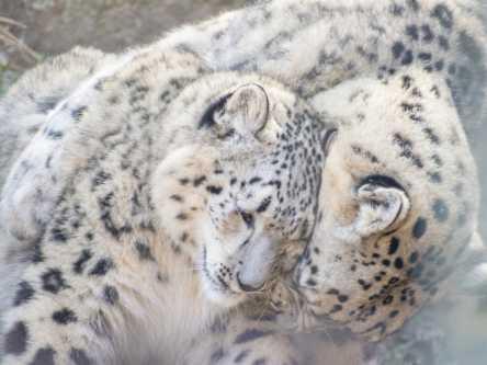 【フォトジェニックなカメラ女子旅】ベビーラッシュの動物園でふわもこの赤ちゃんアニマルに癒されよう