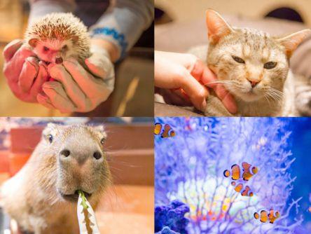 猫カフェも水族館も超えた⁉ハリネズミやカピバラに会える「オービィ横浜」
