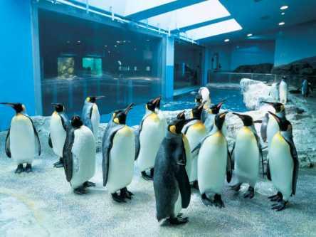 ペンギンにさわれるのは日本でここだけ!「長崎ペンギン水族館」