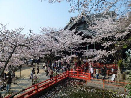 和歌山県のお花見・桜の名所(2021)夜桜・ライトアップや桜祭りも