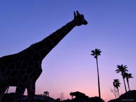 夜の動物園はロマンティック!アドベンチャーワールドの「ナイトアドベンチャー」