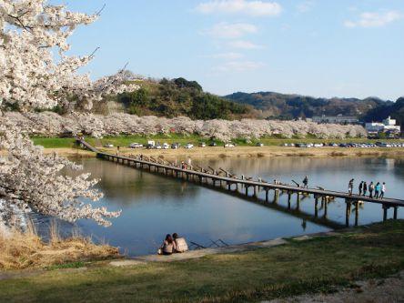 島根県のお花見・桜の名所(2021)夜桜・ライトアップや桜祭りも