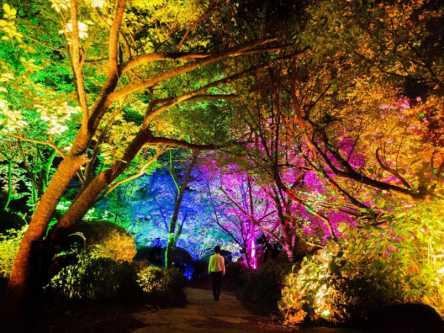 森や木々が幻想的なアートになる!「チームラボ かみさまがすまう森」今年も開催