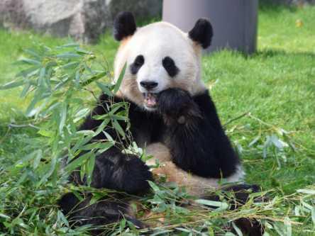 【アドベンチャーワールド】絶対におすすめしたいパンダグッズお土産&パンダグルメ