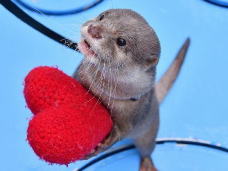 池袋サンシャインシティのバレンタインはスペシャル企画が目白押し!