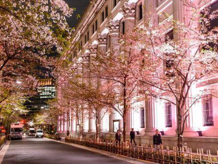食にアートに五感で楽しむ参加型イベント「日本橋 桜フェスティバル2019」開催