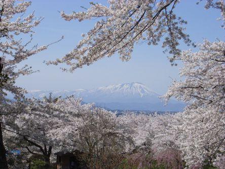 岩手県のお花見・桜の名所(2021)夜桜・ライトアップや桜祭りも