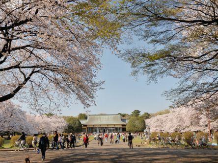 調布・八王子・奥多摩周辺のお花見・桜の名所(2021)夜桜・ライトアップも