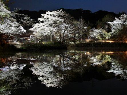 佐賀県のお花見・桜の名所(2021)夜桜・ライトアップや桜祭りも