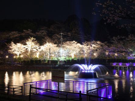 福岡県のお花見・桜の名所(2020)夜桜・ライトアップや桜祭りも
