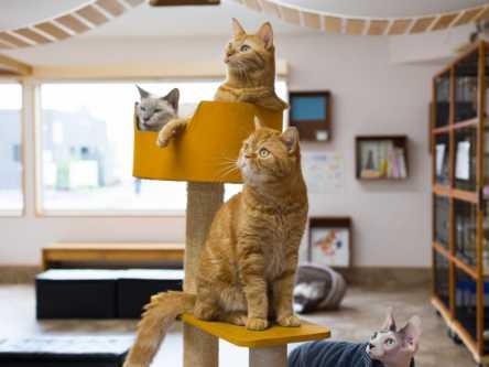 猫もいます!「つくばわんわんランド」でモフモフのわんことにゃんこに癒されよう