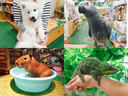 都会のど真ん中に動物園!?恵比寿のペットショップ「ZOO」で即癒しチャージを!
